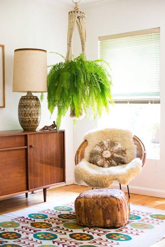 Plantas de interior para colgar | Decoración