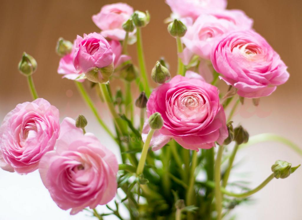 Flores de Primavera Ranunculos